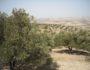 オリーブやブドウなど栽培する地中海式農業