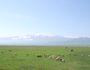 遊牧、移牧、放牧の違いとは何?